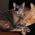 Болезни глаз у кошек: симптомы и лечение. какие бывают заболевания глаз у кошек и как их распознать?
