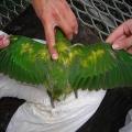 Чем болеют попугаи?