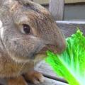 Что едят зайцы?