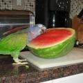 Что любит попугай?