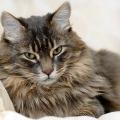 Что понимают кошки?