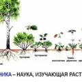 Что такое ботаника?