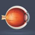 Что такое глаз?