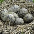 К чему снится гнездо?