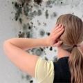 Как избавиться от плесени на стенах