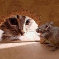 Как ловить мышей?