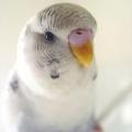 Как научить попугаев разговаривать: практические советы