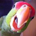 Как научить попугая говорить и петь?