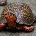 Как назвать черепаху?
