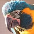 Как назвать попугая, чтобы имя ему понравилось