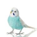 Как подобрать имя для попугая