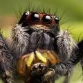 Как убить паука?