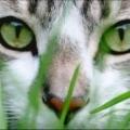 Как видят кошки окружающий мир?