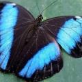 Как выглядит бабочка