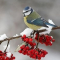 Какие птицы зимующие?