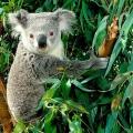 Какие животные в австралии?