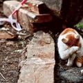 Кто знает, почему кот плачет?