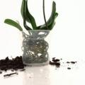 Орхидея в горшках: какие емкости лучше выбрать?