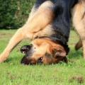 Почему чешется собака?