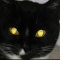 Почему у кошек светятся глаза?