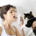 Почему возникает аллергия на кошек?