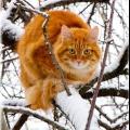 Раскрой тайну, сонник, рыжий кот снится к чему