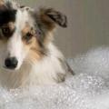 Шампунь для собак: его разновидности и отличия от человеческих