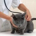 Стерилизовать ли кошку?
