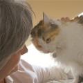 У котенка гноятся глаза. почему и как помочь животному?
