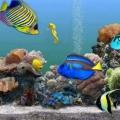 Виды аквариумных рыбок, наиболее подходящие для дома. совместимость видов аквариумных рыбок
