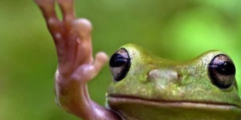 Что делает лягушка?
