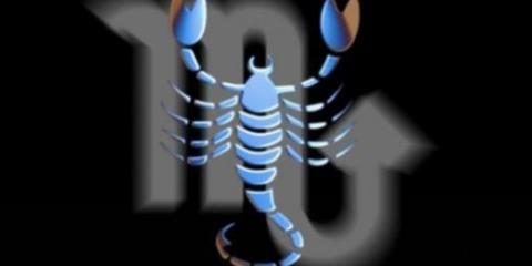 Что любят скорпионы?