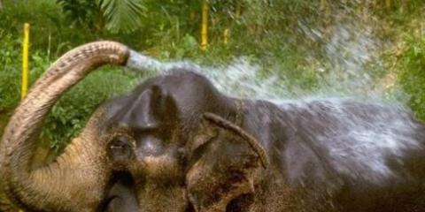 Что может слон?