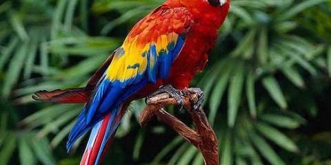 Что такое попугай?