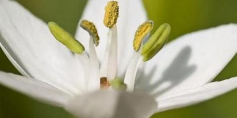 К чему снится белый цветок?