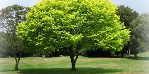 К чему снится дерево?