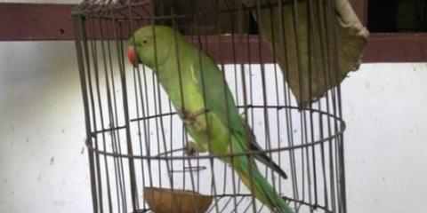 Как купить попугая?
