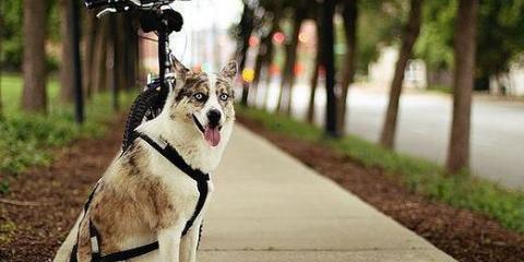 Как одеть шлейку на собаку?