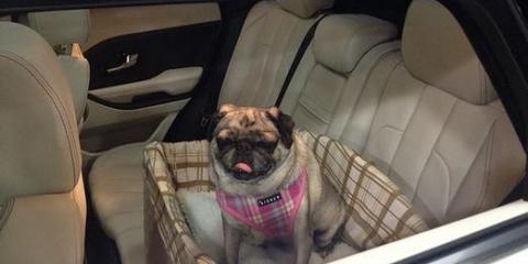 Как перевозить собак?