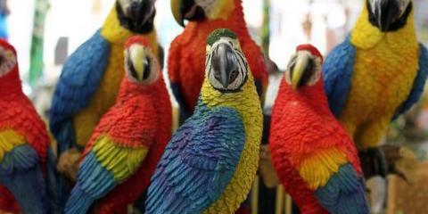 Какие есть попугаи?