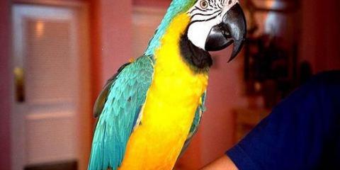 Какие попугаи разговаривают?