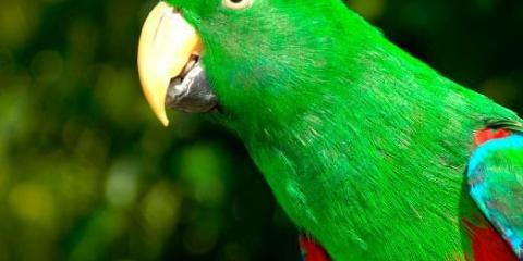 Сколько живёт попугай?