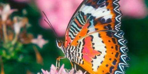 Сколько живут бабочки?