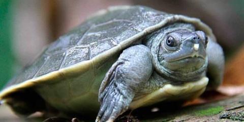 Сколько живут черепахи?